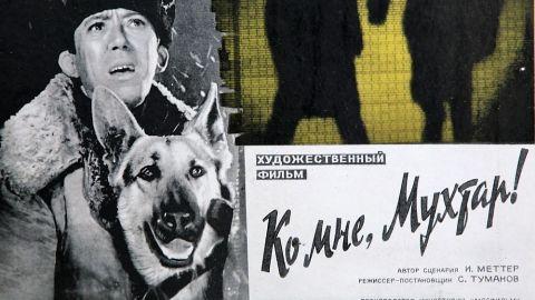 9 интересных фактов о фильме «Ко мне, Мухтар!»