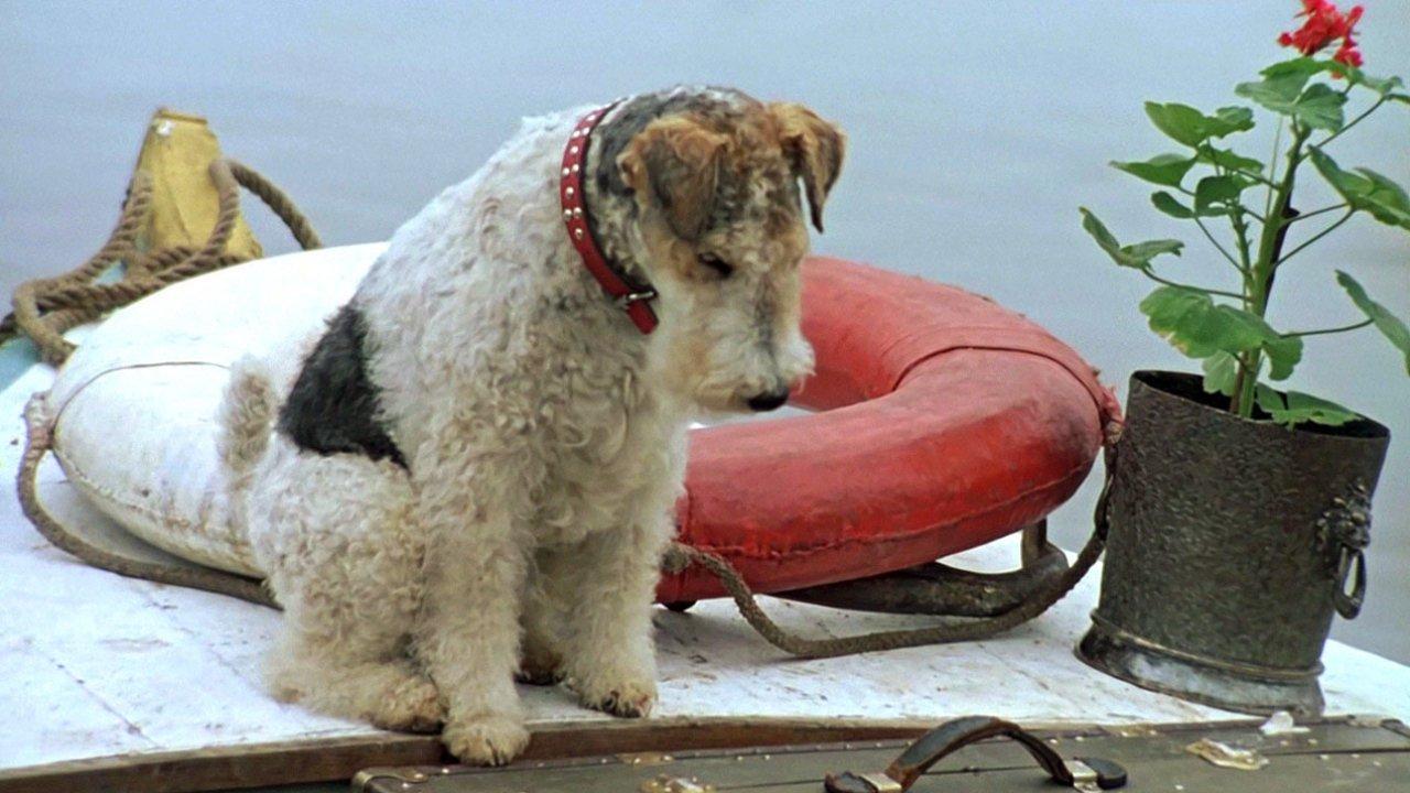 Трое в лодке не считая собаки